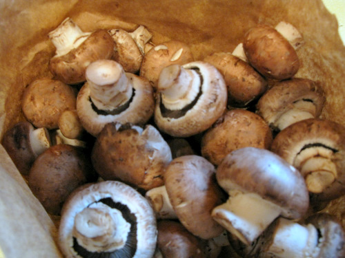 Russian_Mushrooms_Sour_Cream (1)